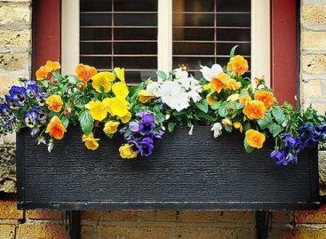 Cửa sổ rực rỡ sắc hoa