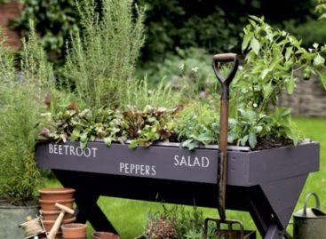 Vườn rau mini tiện ích