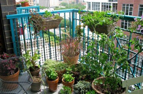"""Ban công – """"vườn xanh"""" trong nhà phố"""