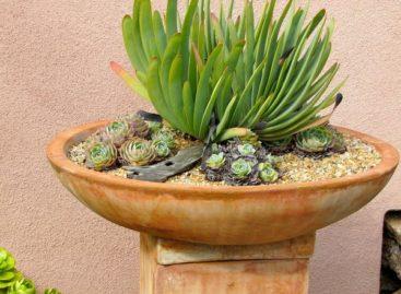 Những ý tưởng thú vị làm đẹp khu vườn với hoa đá