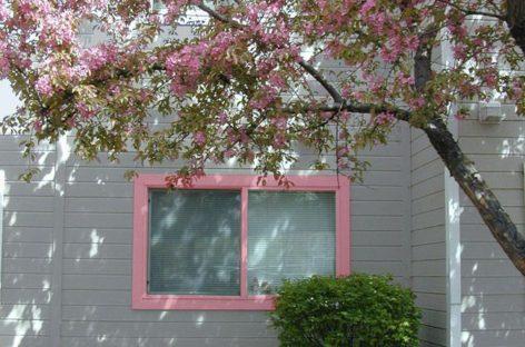 Cẩm nang sửa nhà – Bài 18: Thấm dột khung cửa, cửa sổ tường ngoài