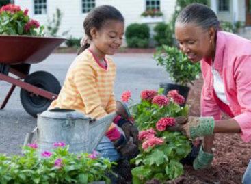 Cẩm nang sửa nhà – Bài 29: Làm cho không khí trong nhà trong sạch