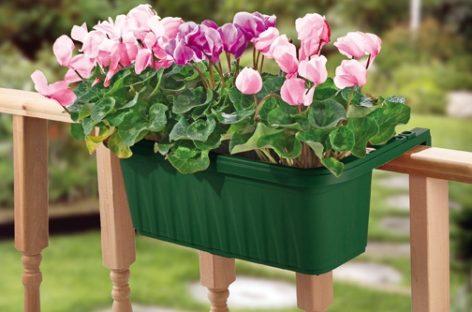 Chậu hoa rực rỡ tô điểm góc sân ngày hè