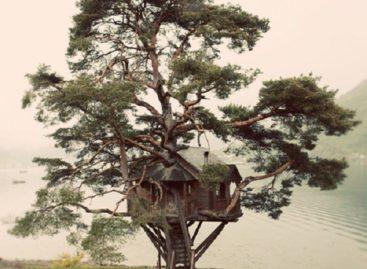 Nhà trên cây cho trẻ năng động