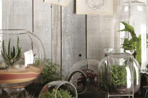Vườn ươm trong nhà