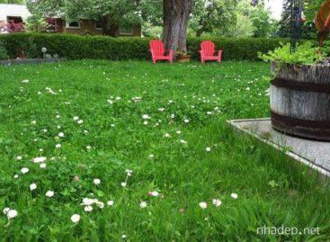 Những ý tưởng trang trí cho bãi cỏ trong vườn