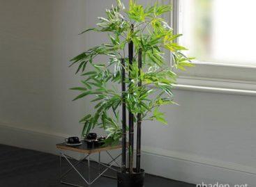 Ý tưởng trang trí không gian sống với cây xanh
