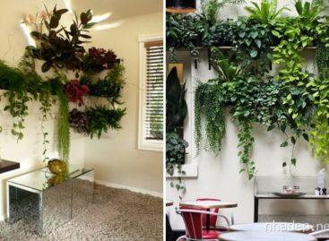 Những ý tưởng thiết kế khu vườn đứng tại nhà