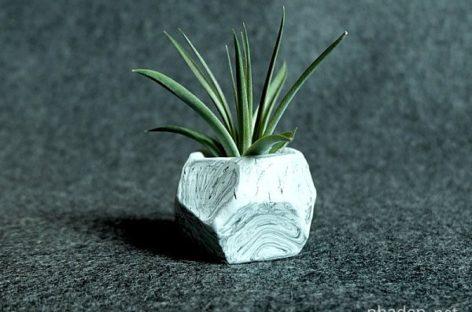 """Cây """"không khí"""" (air plants) và năm cách trưng bày độc đáo"""