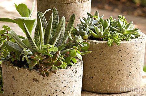 10 sản phẩm DIY tiết kiệm cho sân vườn