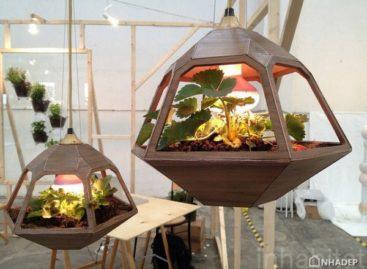 8 mẫu vật dụng nội thất thiết kế theo nghệ thuật trồng cây terrrarium