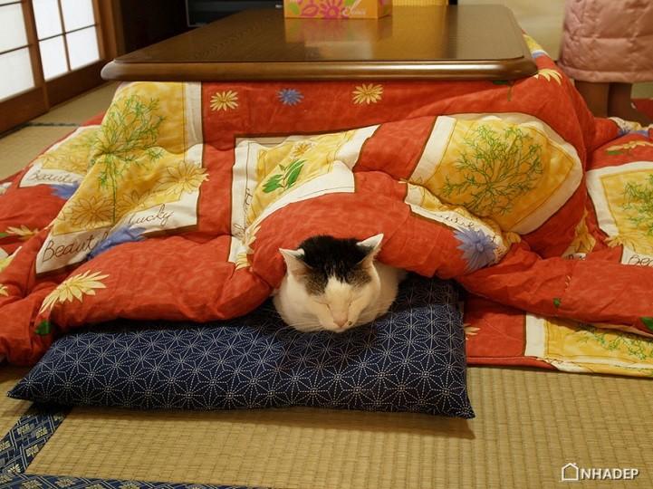 Chiec giuong Kotatsu suoi am_07