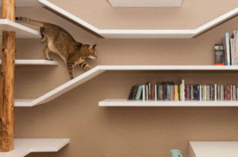 Mẫu kệ sách đẹp mắt dành cho những người yêu mèo