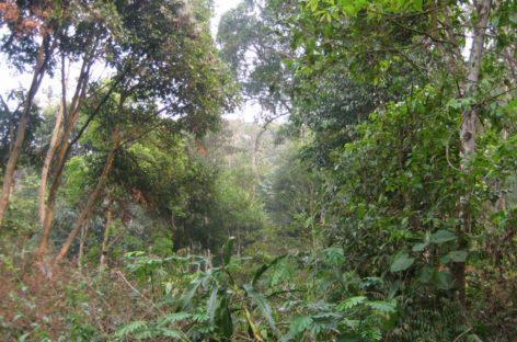Giới thiệu các loài gỗ ít được biết đến của Việt Nam