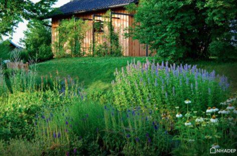 Các ý tưởng không tốn kém để làm đẹp sân vườn (Phần 2)
