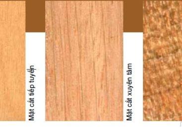 Các loài gỗ ít được biết đến của Việt Nam (Phần 2)