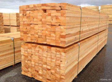 Các loại gỗ mềm thông dụng (Phần 4) – Gỗ Linh sam