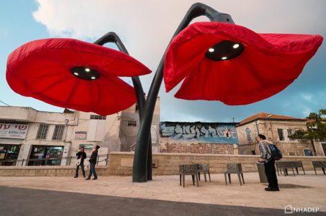 Những bông hoa cung cấp ánh sáng và bóng mát cho người đi bộ ở thành phố Jerusalem, Israel