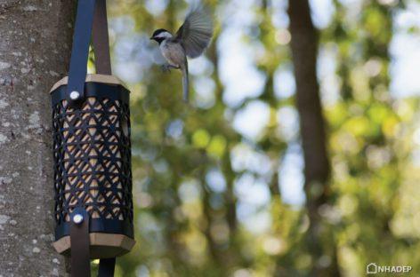 Những chiếc tổ ấm áp dành cho những chú chim Chickadee
