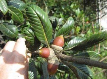 Các loài gỗ ít được biết đến của Việt Nam (Phần 13)