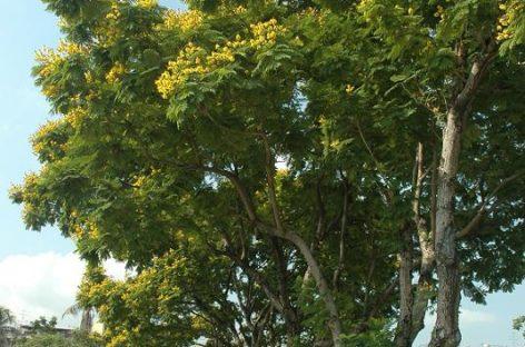 Các loài gỗ ít được biết đến của Việt Nam (Phần 12)