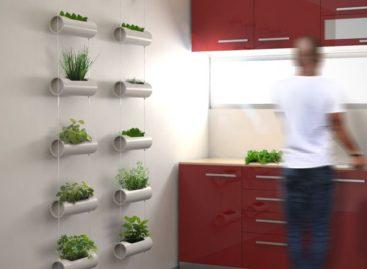 Tiết kiệm không gian với chậu cây treo cho khu vườn mini của bạn