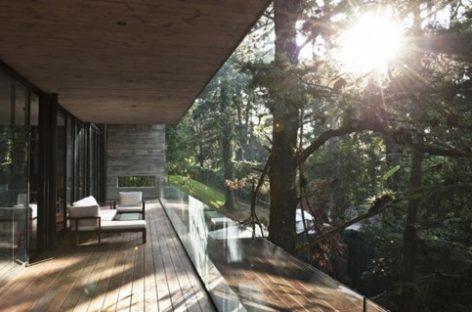 Ghé thăm ngôi nhà sang trọng với thân cây xuyên qua
