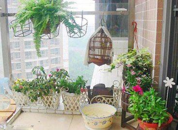 Cây xanh tươi tắn cho nhà chung cư