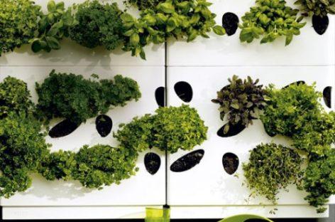 Thiết kế vườn phù hợp phong thủy
