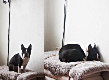 Tự thiết kế những chiếc giường lạ mắt cho cún yêu