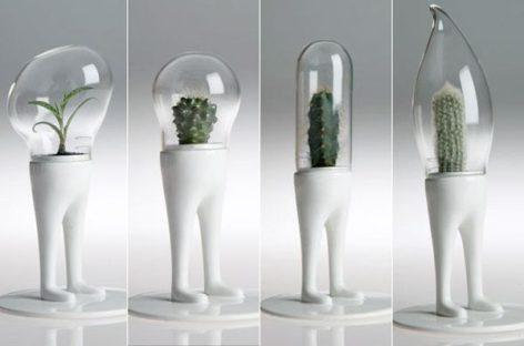 Ý tưởng thiết kế vườn treo trong nhà