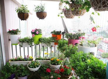 Ban công rực rỡ các loại hoa theo mùa