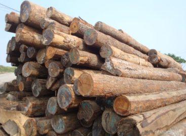 Các loại vật liệu thường sử dụng trong sản xuất đồ gỗ (Phần 1)