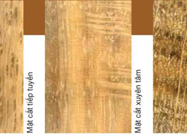 Các loài gỗ ít được biết đến của Việt Nam (Phần 9)