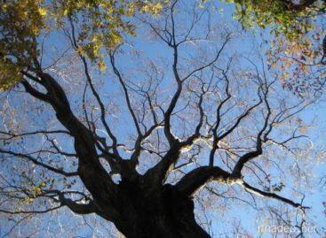 Các loài gỗ ít được biết đến của Việt Nam (Phần 7)