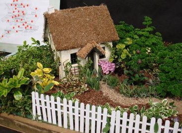Xinh xinh những khu vườn thu nhỏ