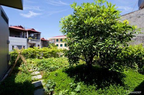 Ngắm nhìn ngôi nhà xanh nằm giữa thủ đô Hà Nội