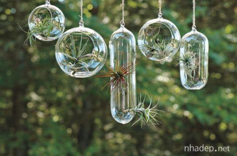 Những kiểu vườn đặc biệt cho nhà thêm xinh