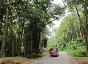 Các loài gỗ ít được biết đến của Việt Nam (Phần 8)