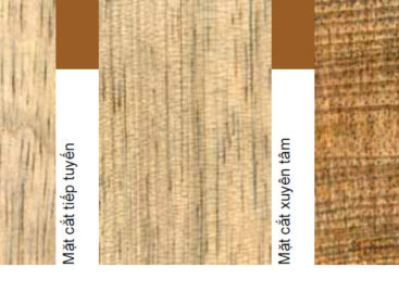 Các loài gỗ ít được biết đến của Việt Nam (Phần 6)