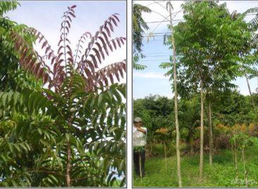 Các loài gỗ ít được biết đến của Việt Nam (Phần 4)