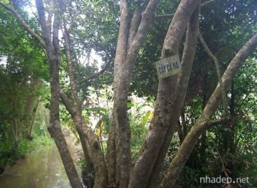 Các loài gỗ ít được biết đến của Việt Nam (Phần 3)