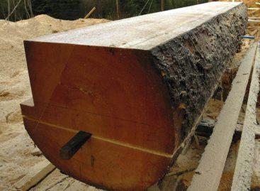Ứng dụng trong kết cấu và khả năng chịu lực của các loại gỗ cứng Hoa Kỳ (Phần 1)