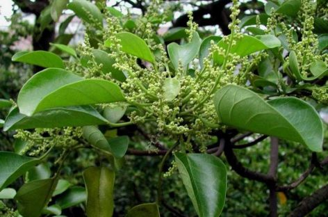 Các loài gỗ ít được biết đến của Việt Nam (Phần 5)